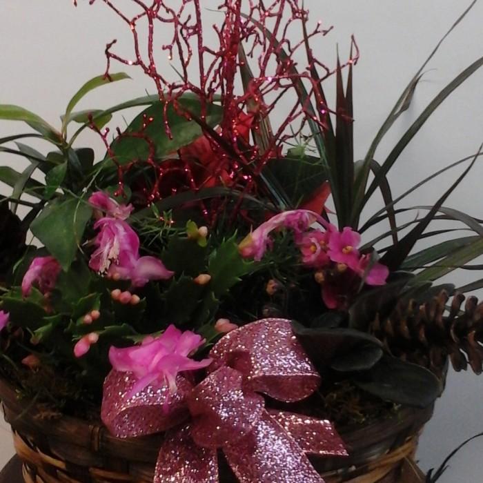 Jardin de Plantes pour Noël