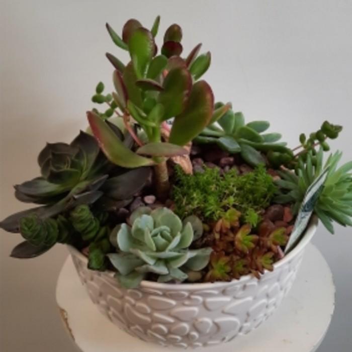 Jardin de cactus et Plantes succulentes